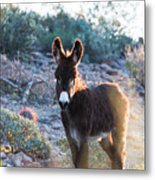 Morning Curiosity Metal Print