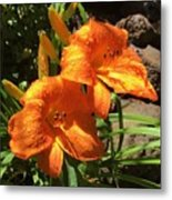 Morning Daylilies Metal Print
