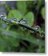 Morning Dewdrops 2 Metal Print