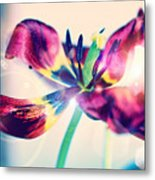 Morning Dream  Metal Print