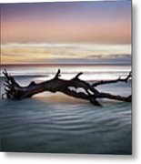 Morning Ecstacy Metal Print