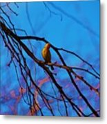 Morning Finch Metal Print