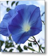 Morning Glory Delight Metal Print