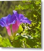 Morning Glory I Metal Print