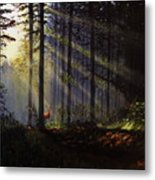 Morning Glow In The Forest Metal Print