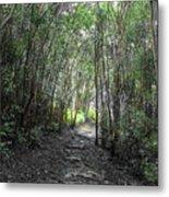 Morning Hike On Waihee Metal Print