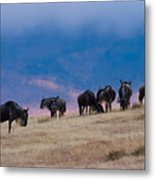 Morning In Ngorongoro Crater Metal Print