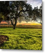 Morning In Wine Country Metal Print