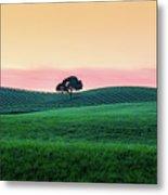 Morning Light And Oak Tree Metal Print