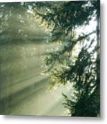 Morning Light IIi Metal Print