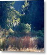 Morning Marsh Sunshine Metal Print
