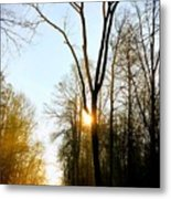 Morning Mood In The Forest Metal Print