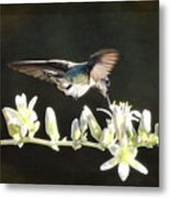 Morning Nectar Flyby  Metal Print