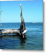 Morning On Longboat Key Metal Print