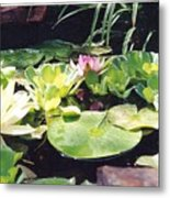 Morning Pond Metal Print