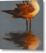 Morning Reflection Metal Print