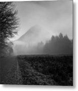 Morning Scene In Olympic National Park Metal Print