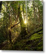 Morning Stroll In The Forest Metal Print