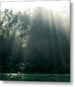 Morning Sunshine Metal Print