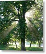 Morning Tree Metal Print
