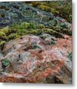 Moss And Lichen Abstract Metal Print