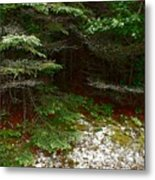 Moss And Lichen Metal Print
