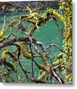Moss And Trees Metal Print