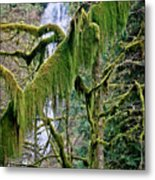 Moss At Munson Creek Metal Print