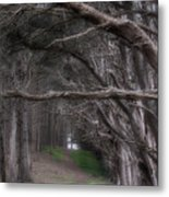 Moss Beach Trees 4191 Metal Print