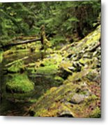 Moss By The Stream Metal Print