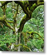 Moss Covered Arms Metal Print
