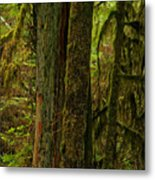 Moss Covered Giant Metal Print