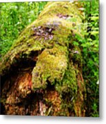 Moss Covered Log 3 Metal Print