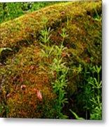 Moss Covered Log Metal Print