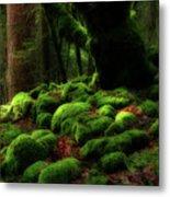 Moss Covered Rocks And Tree Yosemite Np California Metal Print