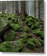 Moss Covered Rocks Metal Print