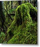 Moss Covered Tree Stump Metal Print