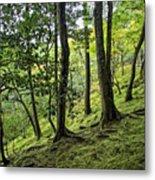 Moss Forest - Ginkakuji Temple - Japan Metal Print