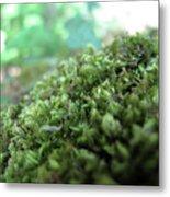 Moss I Metal Print