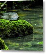 Moss In A Spring Metal Print