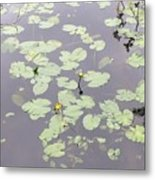 Moss Lake Metal Print