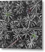 Moss Near Mirror Lake Metal Print