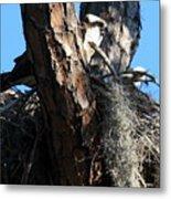 Moss Nest Metal Print