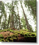 Moss On A Log Under The Cedars Metal Print