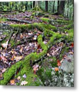 Moss Tree Roots Fall Color Metal Print
