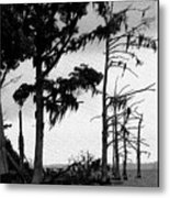 Mossy Beach Trees Metal Print