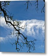 Mossy Branches Skyscape Metal Print