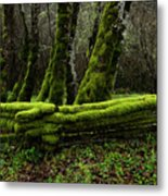 Mossy Fence 3 Metal Print