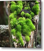 Mossy Fence - 365-321 Metal Print