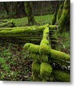 Mossy Fence 4 Metal Print